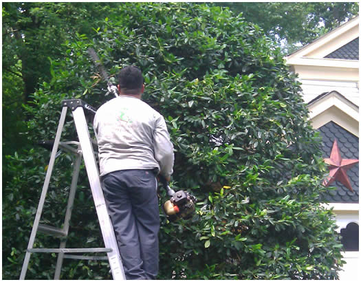 Your Landscape Partner Northern Virginia Residential Tree Care Services